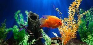 low maintenance species is key to your success as a fish owner