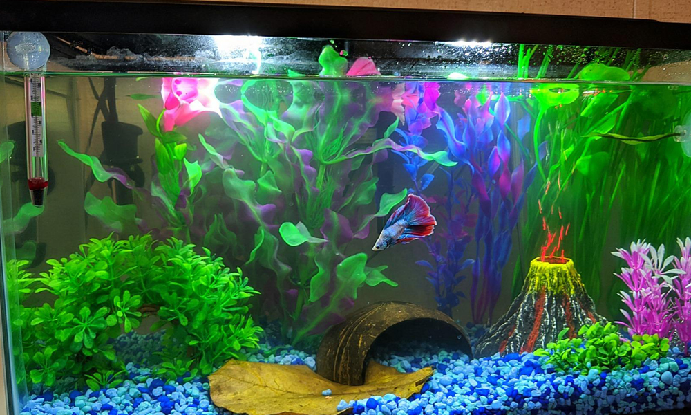 Disadvantages Of Fish Tank Bubblers