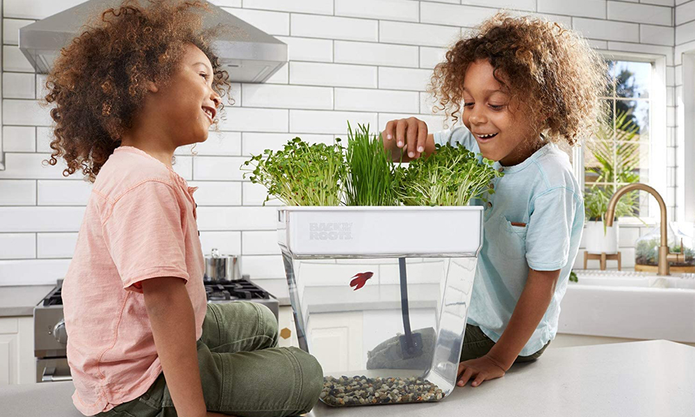Types Of Self-Cleaning Fish Tanks