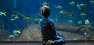 Aquarium Size Chart